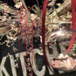 定禅寺通【定禅寺ヒルズⅡ6階 RAKUGAKITCHENでお花見鑑賞・撮影プラン🌸朝6:00~17:00まで撮影に限り1,000円/1h】